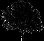 tree_silhouette