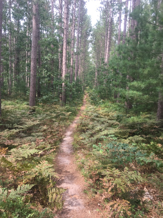 NCTR fern pine